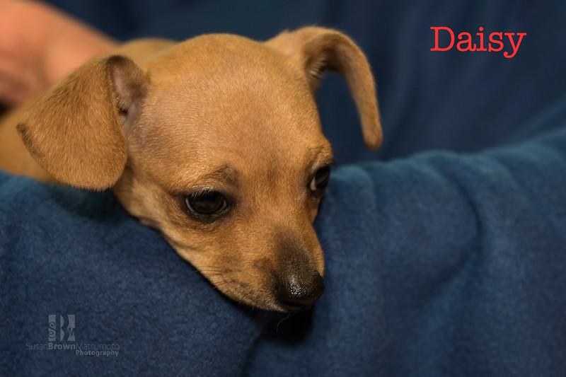 Daisy 1 WMN