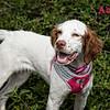 Abby 1 WMN