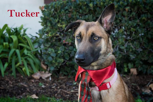 Tucker 1 Watermark