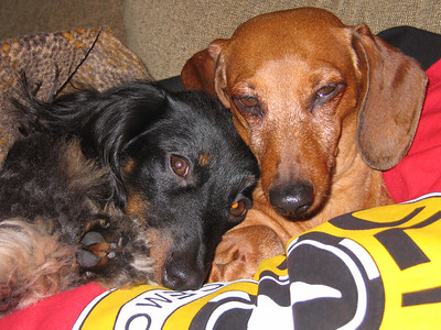 2006 Sleepy Schmoos