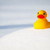 316 of my 365 project; frozen duck