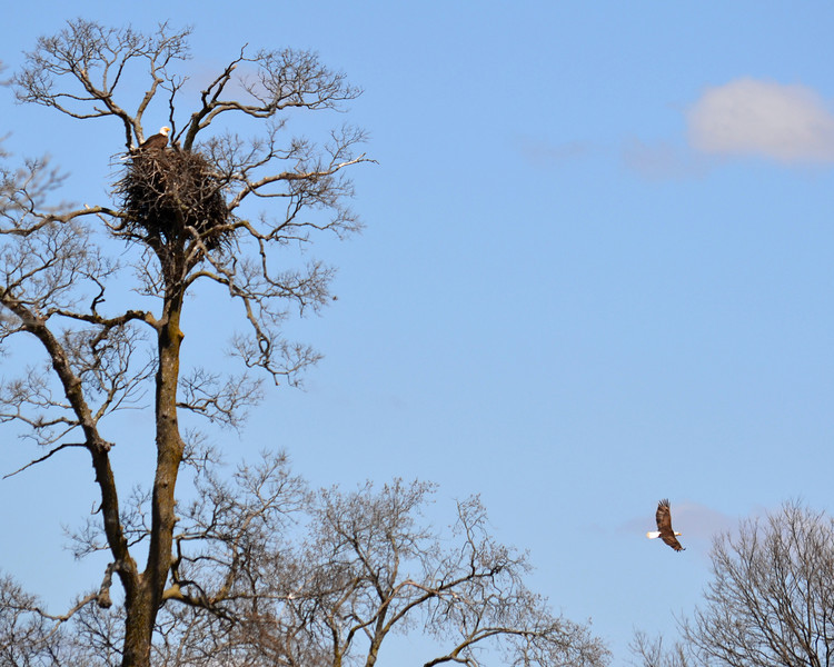 Eagle Nest<br /> Photo taken at Eagle Park in Rockville, MN.