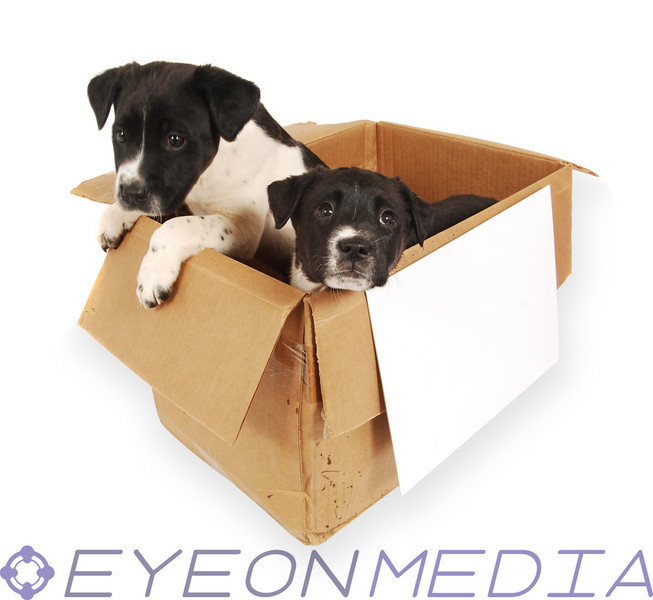 Two puppies in a cardboard box with a blank sign on front.