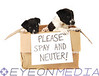 "Two puppies in a cardboard box with a ""Please Spay and Neuter!"" sign on the front."