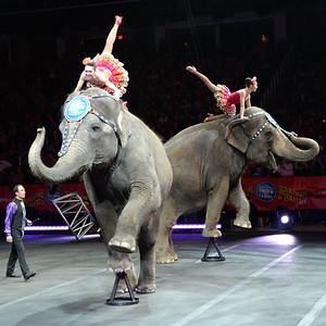 Elephants 04
