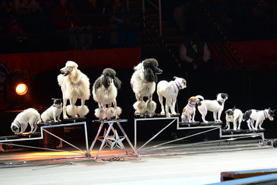 Circus dogs 01