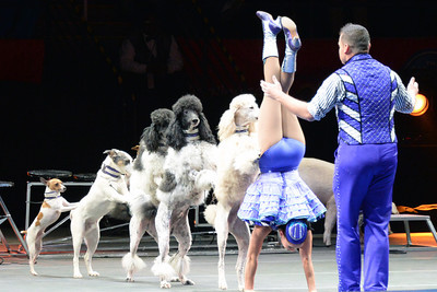 Circus dogs 02