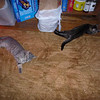 Zonked kittens on their last day with us.  They now live with the Warren family.