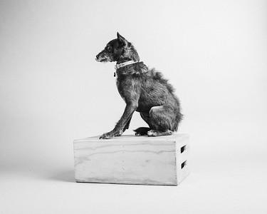 lastdogs-1702bw
