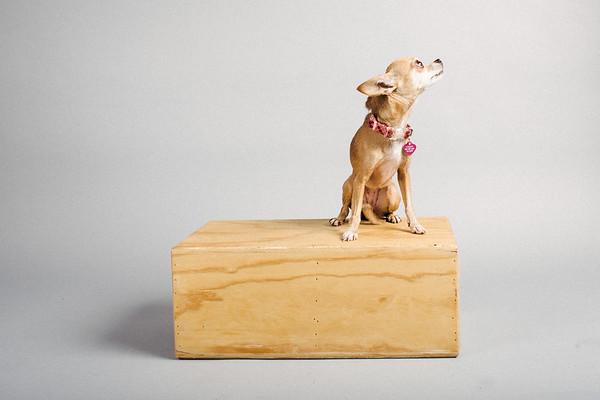 The Smalldogs Studio last shoot