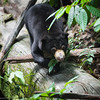 "Exploring the forest habitat is a full time job for these sun bears since their rescue.<br /> <br /> All print proceeds go to the BSBCC, who rescue and care for these sun bears. <br />  <a href=""http://www.bsbcc.org.my"">http://www.bsbcc.org.my</a>"