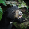 "Say cheese!<br /> <br /> All print proceeds go to the BSBCC, who rescue and care for these sun bears. <br />  <a href=""http://www.bsbcc.org.my"">http://www.bsbcc.org.my</a>"