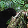 "The BSBCC forest habitats are full of interesting places to explore.<br /> <br /> All print proceeds go to the BSBCC, who rescue and care for these sun bears. <br />  <a href=""http://www.bsbcc.org.my"">http://www.bsbcc.org.my</a>"