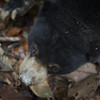 "Bear's eye view.<br /> <br /> All print proceeds go to the BSBCC, who rescue and care for these sun bears. <br />  <a href=""http://www.bsbcc.org.my"">http://www.bsbcc.org.my</a>"