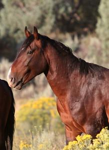 Dulce in the morning Jicarilla Wild horse