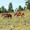 Caracas Mesa Mares and foals