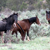 Protectors<br /> Gone now...are these horses from the land they loved<br /> <br /> Rachael Waller Photography<br /> 2008 wild horses