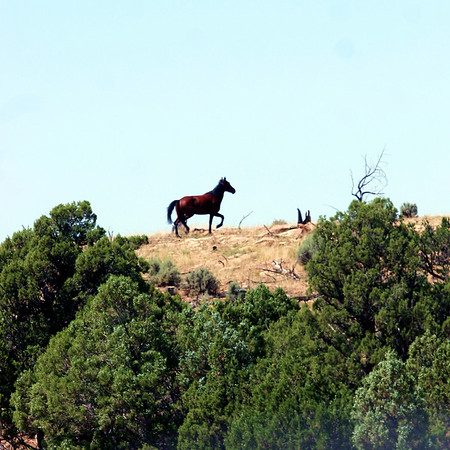 A banished stallion blazes his own trail.  Jicarilla Wild Horse