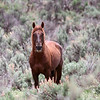 Red Crow <br /> Stallion<br /> <br /> Rachael Waller Photography 2008 Wild Horses
