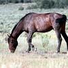 Dulce <br /> Jicarilla Wild Horse