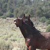 Dulce's Smile<br /> We miss you Dulce. Last seen 2007<br /> <br /> Jicarilla Wild Horse