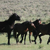 Chama's boys at play<br /> <br /> Rachael Waller 2008 Wild Horses