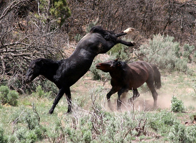 High Noon III (Malapais & Brazos..when they were free)   Rachael Waller Photography 2008 Wild horses