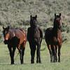 Chama's Boys<br /> <br /> Rachael Waller 2008 Wild Horses