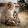 Monkeys_of_Arashimayama_2O1A0238