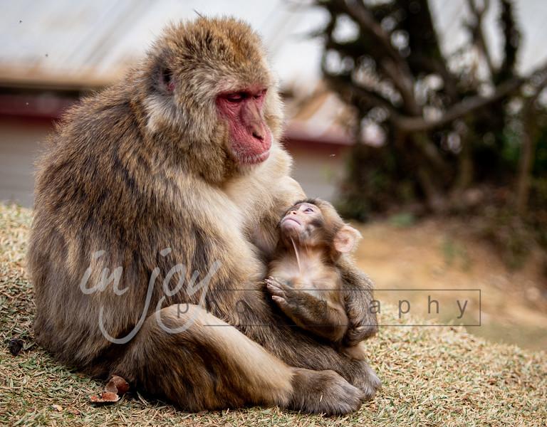 Mama_and_Baby_Monkey_2O1A0246