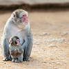 Mama_Monkey_&_Baby_2O1A0482