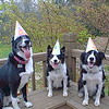 Birthday dogs!  April 2001
