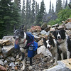 Hiking dogs:  Riley (with his halti leader), Jade, and Dallas.