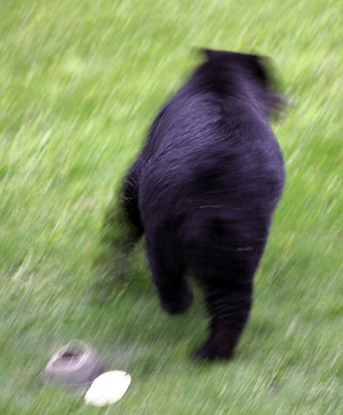 Da bear he run.