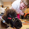 April Kelly greets therapy mini-horse Gypsy Gold, from TheraPAWS, at the Arc of Opportunity in Fitchburg on Wednesday afternoon. SENTINEL & ENTERPRISE / Ashley Green