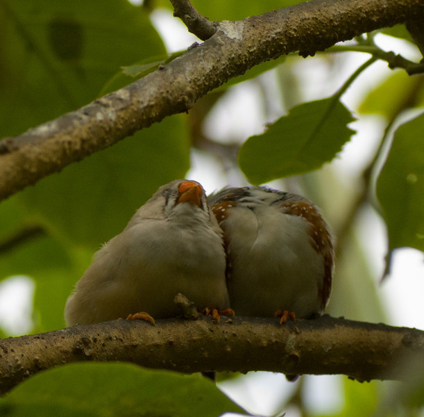 Birds in love.