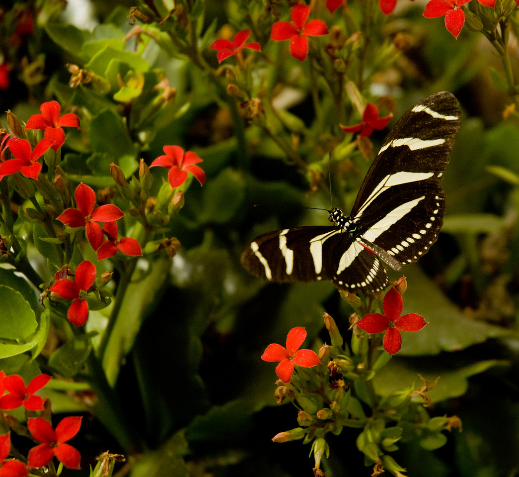 I love the contrasting colors of the tiny flowers and the white-black stripes of the butterfly.