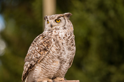 If you look at the original file at full size, you can see people reflected in the owl's eyes.  That's detail!