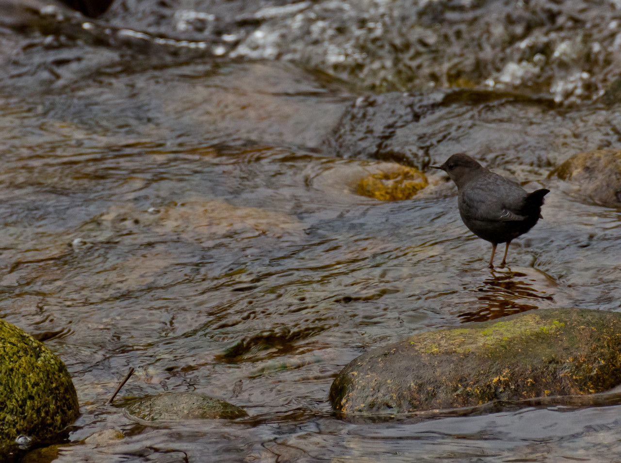 This little bird is waiting for dinner to float by.