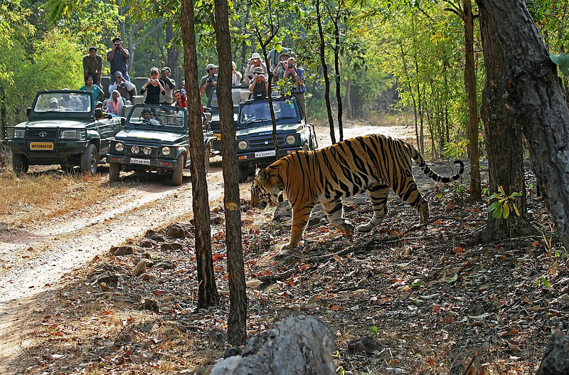 Tiger and Tourism