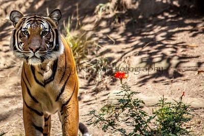 2013 San Diego Zoo
