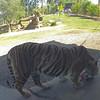 Phoenix Zoo - April 2016