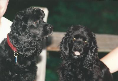 Toby (left) and Jasper