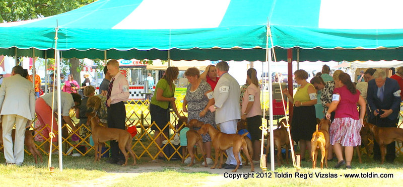 Line up for Best of Breed competition... Thanks Jen Miller for taking Freya in for us.