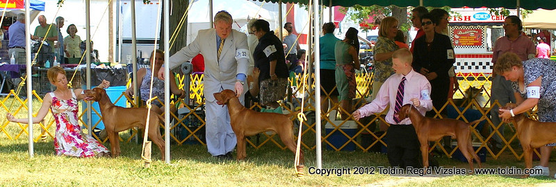 Winners Dog competition...