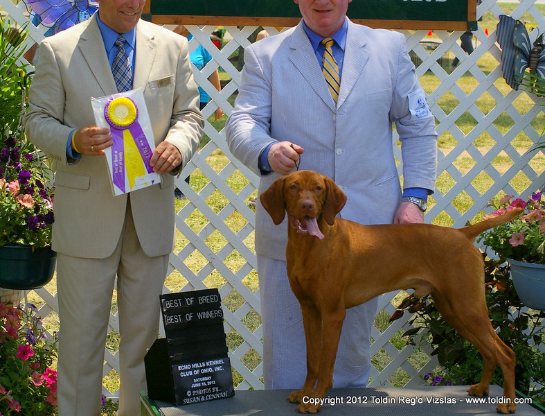 ... and here we have the Best of Breed Winner out of classes, beating 16 specials! Ain't he cute!!! Official picture will be much better, but I love this one with this Keepiresqe expression on his face!