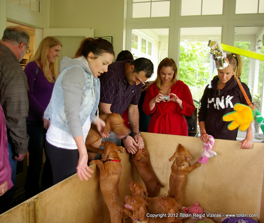 ... getting crowded in the whelp room! :) Puppies love it!