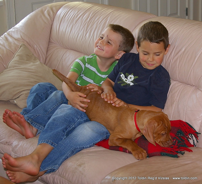 What a fantastic picture of the Lanfear boys! ---- Tucker included.... :)