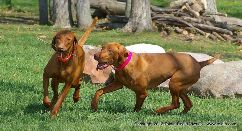 Shiraz and Freya always chase each other...