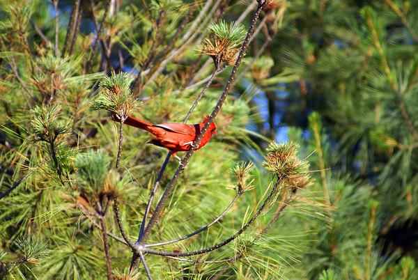 Tony's Bird Photos